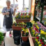 お盆のお花を取り揃えています!