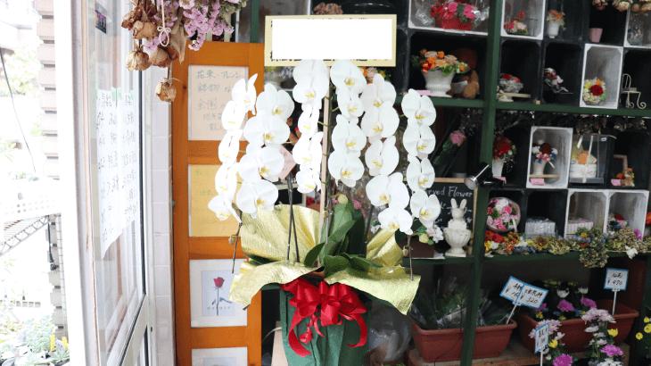 創業50周年の胡蝶蘭