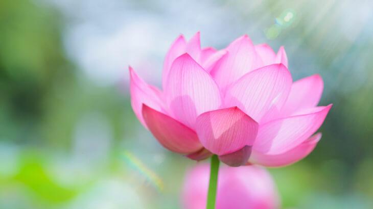 お盆の営業時間と仏花・墓花