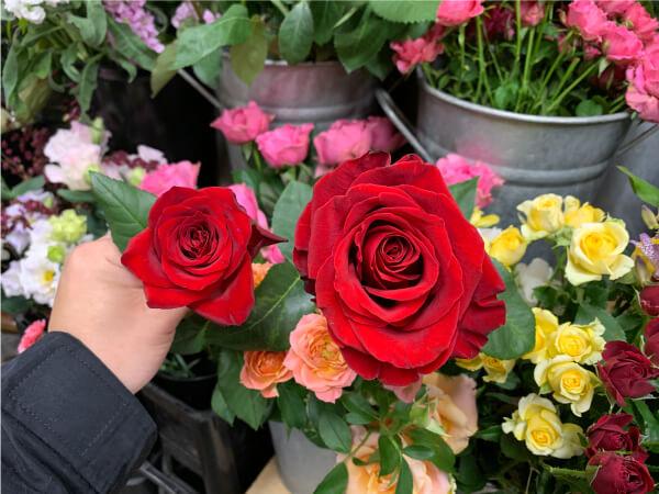 赤バラのサイズの比較